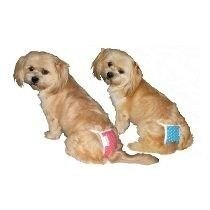 Calcinha Higienica C/ Absorventes Cães GG - Amf pet