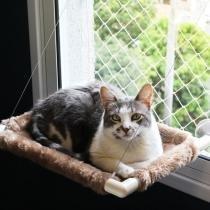Cama de gato para janela Catbed Gatton - Pelúcia Areia -