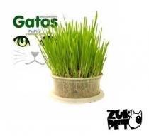 Graminha Para Gatos - Petpira