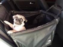 Kit passeio-capa protetora carros P-cinto segurança e peitoral - King of pets