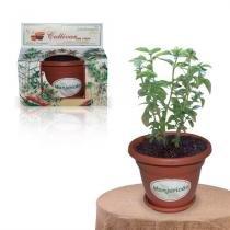 Lembrancinha Ecológica Kit Vamos Plantar Manjericão - Festabox