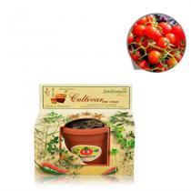 Lembrancinha Ecológica Kit Vamos Plantar Tomatinho - Festabox