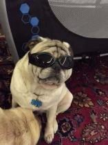 Oculos De Sol Para Cães Com Proteçao Uv - Pet import