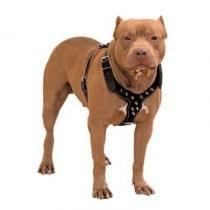Peitoral Couro Com Spikes P/ Pitbull E Outras Raças - Pet import