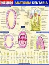 Resumao - Anatomia Dentaria - Bfa