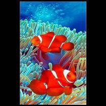 Toalha de praia buettner - veludo - estampado - peixe palhaço - Buettner