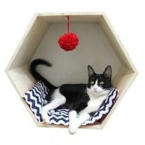 Toca Hello Pet Hexagonal Azul com Vermelho para Gatos -