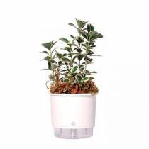 Vaso Auto Irrigável Raiz N01 Branco Mini 9x10 - Raíz vasos autoirrigáveis